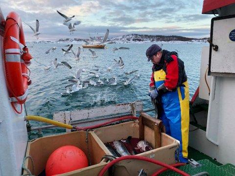Støtte: Fiske Jan-Erik Andersen får ikke økonomisk støtte fra Steigen kommune, mens Nordland Fylkes Fiskarlag bidrar med verbal støtte.