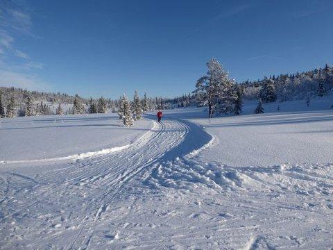 Det er god plass i skiløypene mange steder og lett å holde forskriftsmessig avstand. Foto: Audun Bringsvor