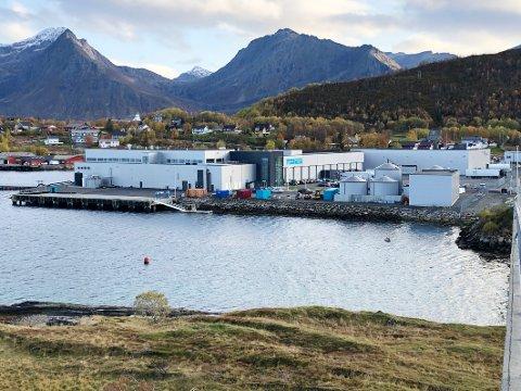 Ringvirkninger: Etableringen av lakseslakteriet til Cermaq Norway i Bogen i 2018 har så langt ikke gitt de ønskede ringvirnmingene på stedet. Nå forsøker lokale krefter å gjøre noe med det.