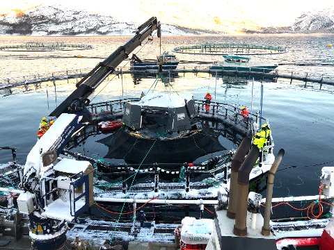 Sjøsettes: Sensoren som benyttes i iFarm-prosjektet sjøsettes i Steigen. Sensoren skal følge med hver enkelt fisk.