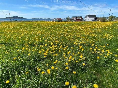 Presedens? Politikere frykter at et ja til boligbygging på denne dyrkede marka, vil skape en uønsket presedens.