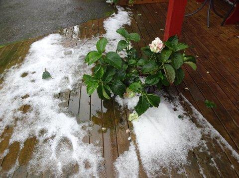 Snøstorm i Os 1. august? Alt er visst mulig denne sommeren.