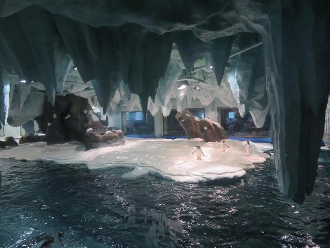 Pingvinene flyttet fra Bergen til Kina for to år siden. Nå har de flyttet i et gigantisk anlegg.