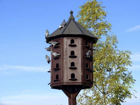 Det nye byrådet vil innføre duetårn for å begrense bestanden. Poenget er å fjerne duenes egg.