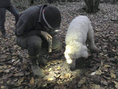Nesen til hunden Buk svikter ikke denne gangen heller. På kommando fra Carlo Marenda gaver hunden i jorden for å vise jegeren mer nøyaktig hvor han kan finne den eksklusive trøffelen.
