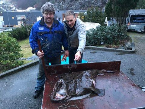 Arne Kenneth Hessevik og Ragnar Urheim har mye fisk i garnet før, men aldri en så stor breiflabb.