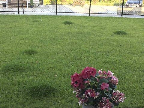 Malvin Polden sier den nye gressplenen ser ut som en golfbane, men at de mystiske tuene ødelegger.