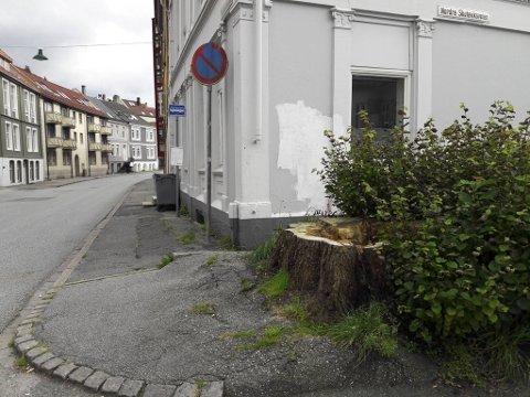 Denne trestubben har blitt stående etter at kommunen i fjor vinter fikk fjernet et gigantisk almetre i Nye Sandviksveien.