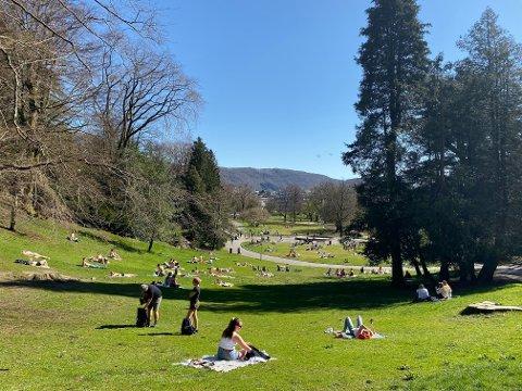 Det var mye folk i Nygårdsparken på Møhlenpris da gradestokken målte 20,4 grader. Det er sendt ut farevarsel på lyng- og gressbrann på Vestlandet.