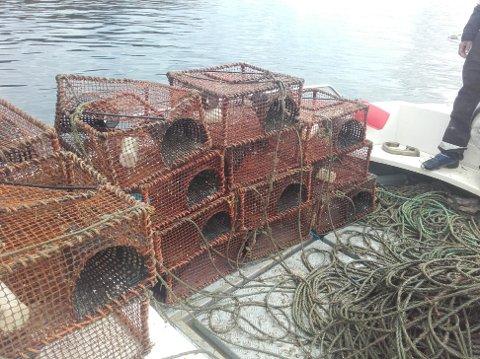 Krepseteinene er nå blitt fjernet fra sjøen