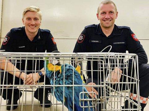 Det var brannkonstabel Kristoffer Hauge og utrykningsleder Yngve Eriksen i Bjørnafjorden brann og redning som klarte å fange papegøyen.