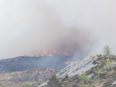 Fra huset sitt ser Linn Forland ned på flammene som sluker terrenget.