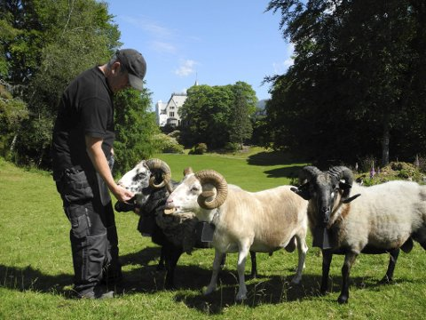 Driftsleder Tor Christiansen i Statsbygg har allerede begynt å se effekten av å ha fått beitedyr på Gamlehaugen.