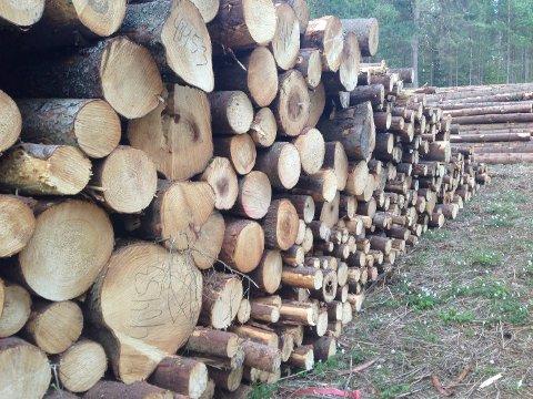 RIFT OM TØMMERET: Tømmerprisene er høye, og nå gjør Glommen Skog framstøt for å kjøpe opp tømmer i Midtfylket.