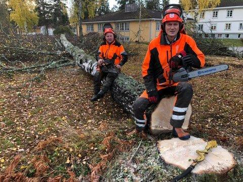 KAN SITT FAG: Anders B. Werp er blant annet utdannet skogsteknikker og veit hva som skal til for å felle store trær.