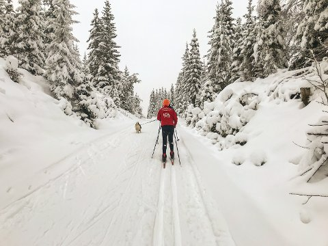 IDYLL: Det er slik vi helst vil ha det. Nå er imidlertid mye av snøen borte, men ikke verre enn at det fortsatt kan være mulig å redde juleskiføret.