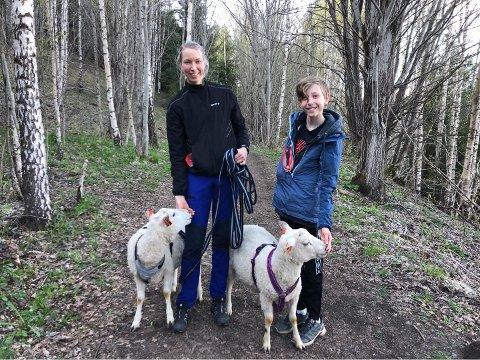 UT PÅ TUR: Stine og Mathias og sauene Karl og Hans Rakel.