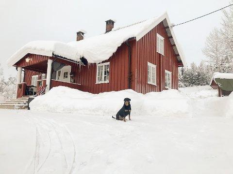 STRØMLØSE: Lene Kristin Nikolaisen og hunden Tia som på bor på Hiåsskauen i Sigdal, var uten varme i 17 timer etter at strømmen forsvant nyttårsaften.