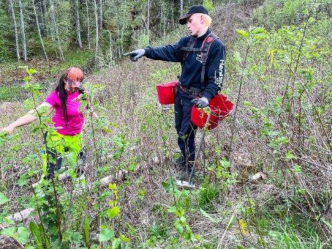 SNAKKER FAG: Sara Hansson og stesønnen Sebatsian (16) diskuterer hvor det skal settes nye planter. Det forholdsvis nystartede selskapet Hansson skog har skogplanting og ungskogpleie som sitt formål.