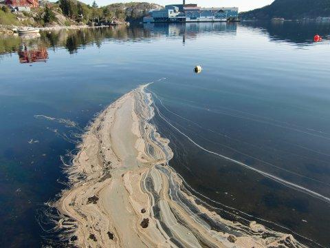 Fettet fløt i Fiskarvik lørdag formiddag.