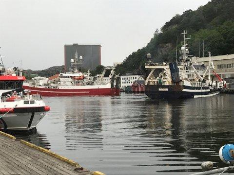 """FLERE ANLØP: Det tok sin tid før nesten 62 meter lange """"Vikingbank"""" kunne klappe til kai for å levere fisk på  Rauhedlå. I fjor var 200 flere fiskebåter innom året før enn det var i 2018."""