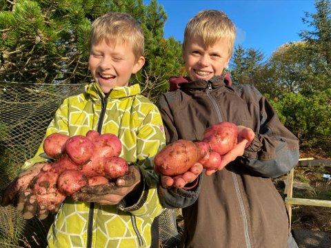 SENE, MEN GODE: Olav Valentin (10) og Haakon (13) viser stolt fram gigapotetene de høstet i helga.