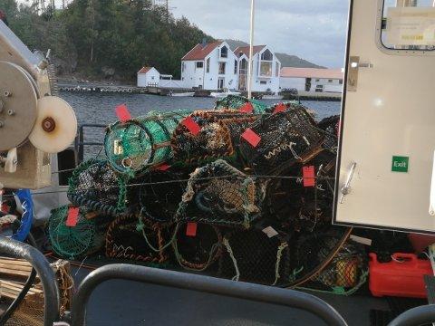 ANMELDT: Fiskeridirektoratet anmeldte forholdene etter at de beslagla 37 hummerteiner en dag i oktober.
