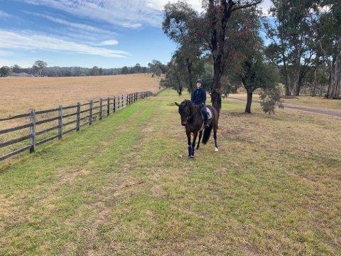 TRYGG JOBB: Kirsty Maun-Tengsareid føler at jobben ved Fernhill Agistment Equestrian Center, er trygg. På gården er det både sprang- og galopphester.
