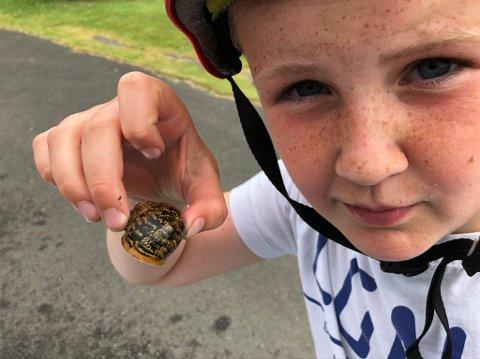 SJELDENT FUNN: Henrik Birkeland (10) kom over ei diger snegle på Årstad i Sokndal. Det viste seg å være ei flekkbåndsnegle, som sjeldent tidligere har blitt observert i Norge.