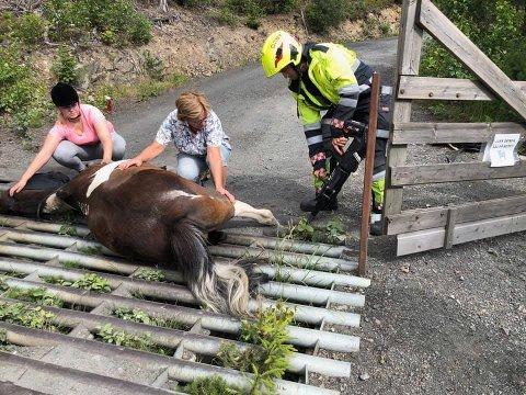 Hesten fikk bistand av både veterinær og brannvesen. Foto: Sindre Nedberget Hansen, Drammensregionens brannvesen