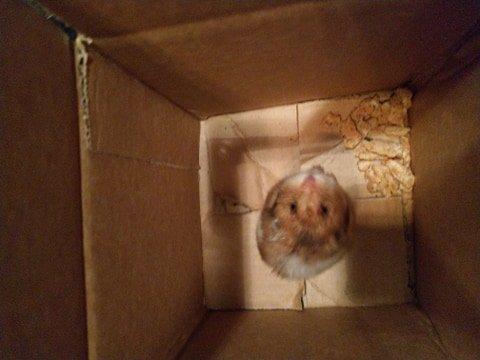 Hamsteren fikk skyss til tryggere omgivelser i en pappeske etter at den ble plukket opp langs fylkesveien.