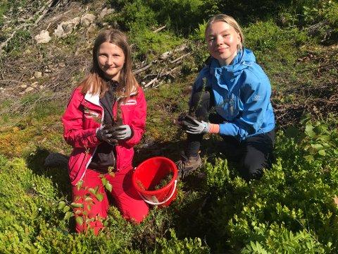 Sommerjobb: Esteja Eidokaite (t.v.) og Erle Sætrang Bermingrud fra Skotselv skole satte granplanter i jorda ved Bingen.. Det ga mersmak, og de kan tenke seg en sommerjobb.