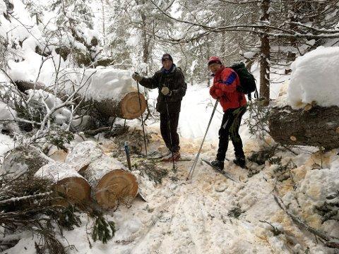 Bjørnar Thoresen til venstre og Geir Tøråsen til høyre hjalp til med å kappe et stort vindfall.