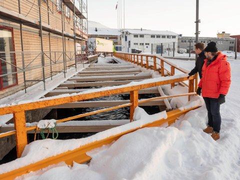 HULL I KAIA:  Mellom piren og bygningene langs den, er det i dag åpent ned til sjøen. Odd-Arne Nilsen og Lars-Helge Jensen drømmer om å få lagt dekke og utnyttet området til kaipromenade.