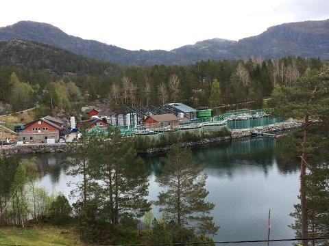 Barlindbotn Settefisk inst i Eikefjorden.