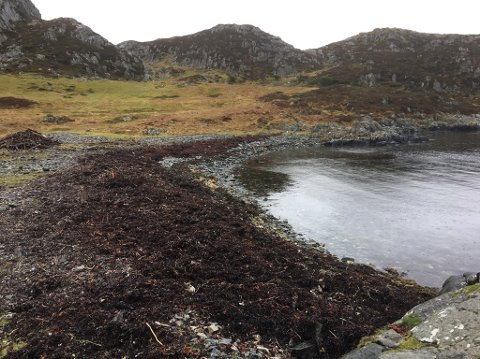 Slik såg Langevikja ut 15. april i år, då den var rydda for plast.