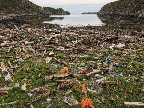 Slik ser Langevikja på Reksta ut, vel 3 mnd etter at den vart rydda for plast.