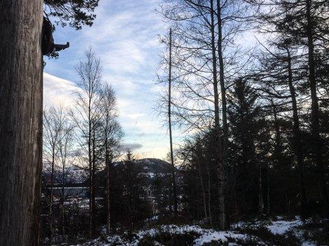 Florø Radio sine to master på Likkjeåsen. Den i forgrunnen står førebels greitt, medan den lenger aust ser ut til å byrje å knekke.