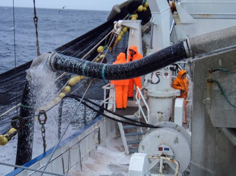 POTENSIAL: Ved ei normalisering av forholda mellom Norge og Russland, kan vi gå mot ein periode med vekst i fiskeeksport til Russland, skriv Alexander Petrov.