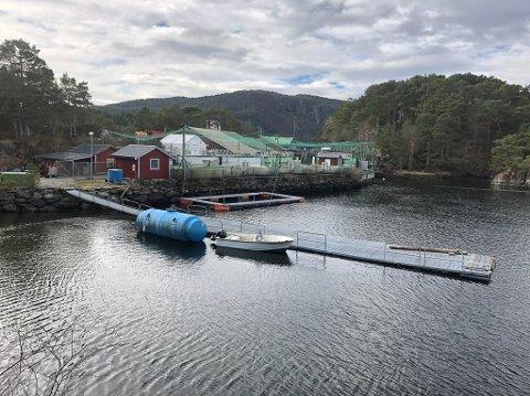 Svanøy Havbruk sitt anlegg for settefisk og rognproduksjon i Marøysundet. Produksjonen er stoppa eit års tid medan ein greier ut om ein skal satse vidare her.