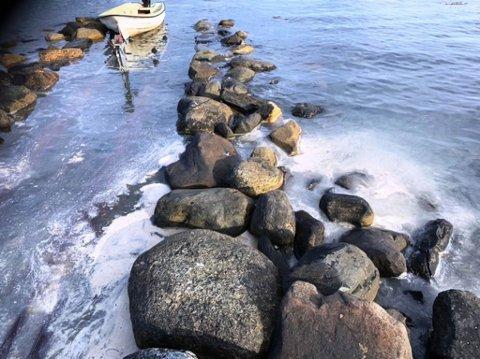 TILGRISA: Fiskefeittet flyt i buktene i Kalvåg etter eit utslepp ved Pelagia torsdag. Men leiinga for ringnotbåten «Gerda Marie» nektar for at noko har gått gale hos dei.