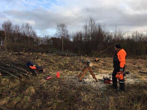 MÅ HOGGE: Delar av lauvskogen på Sørstrand må no vike plass for at flya som skal lande på Florø lufthamn skal kunne gjere det med full hinderfriheit.