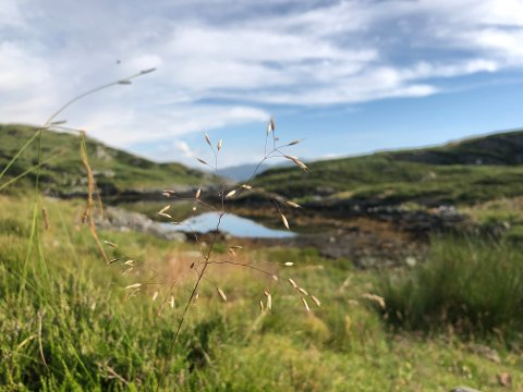Sommar på solkysten - nord i Vestland, men sør i Kinn.