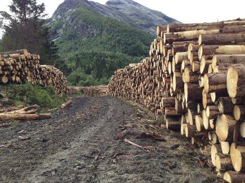 MANGFALD: Hvorfor forsvinner naturmangfoldet? Ifølge forskerne er den desidert største grunnen det som betegnes som arealendringer, som defineres som fysisk ødeleggelse av naturen gjennom menneskelige inngrep som bygging av bolig/hyttefelt, industrielt jordbruk og skogbruk, veier, gruver, energianlegg etc, skriv artikkelforfattaren.