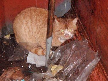 REDD: Katten prøvde å gøyme seg i boset då han vart funnen.