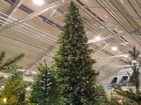 DU GRØNE, GLITRANDE, PLAST: Stadig fleire nordmenn byter ut det ekte juletreet med eit plastjuletre til fleire titals tusen kroner. Foto: Hageland