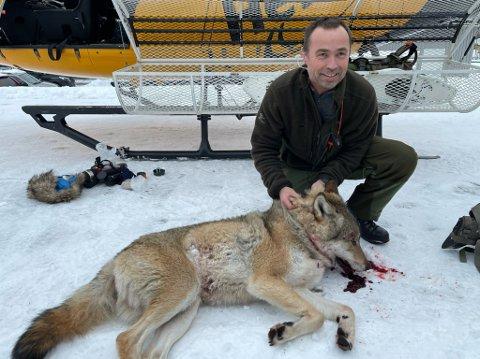 BLANDA KJENSLER: Stein Mortensbakke har jakta ulven «Lucky» i fleire år, etter at den forsynte seg grovt i sauebestanden. – Det er litt kjensler, seier han, og legg til at det er eit flott dyr.