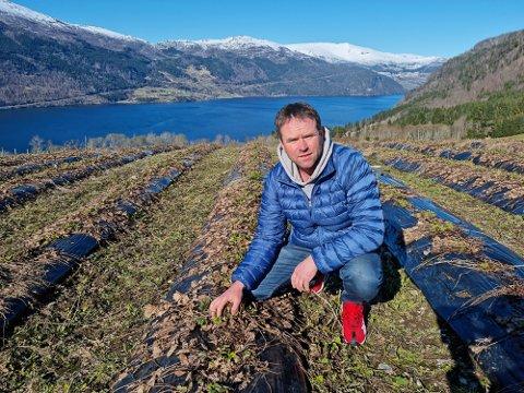 MÅ TENKJE NYTT: Jordbærbonden Øystein Fjellestad frå Sandane brukar utanlandske arbeidarar til plukking av bær om sommaren. I år vurderer han andre moglegheiter.