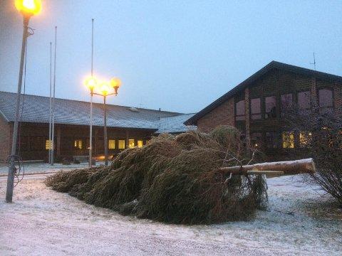 VELTET: Julegrana på Rolvsøy ligger fortsatt rett ut etter at treet veltet under stormen «Aina» i forrige uke.