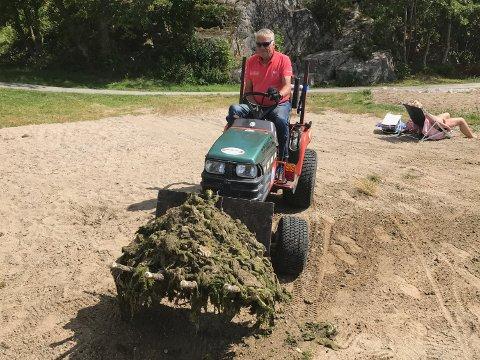STORE MENGDER: Rolf Sture kjører bort noe av tang og sjøgress som ble samlet sammen.
